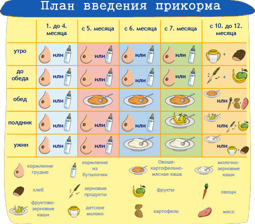 аллергия на прикорм кабачок