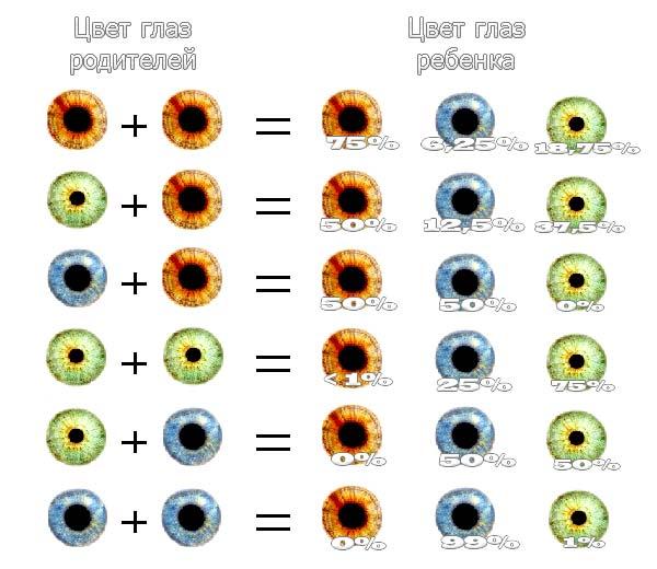 вероятный цвет глаз ребенка