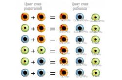 Цвет глаз детей
